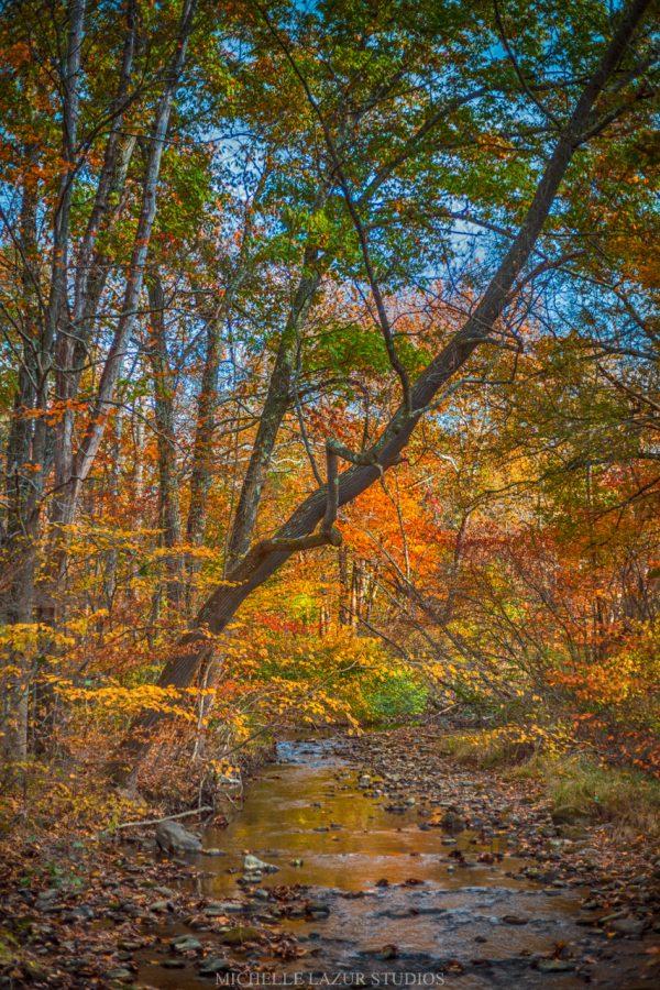 Autumn Stream Fine Art Prints by Michelle Lazur